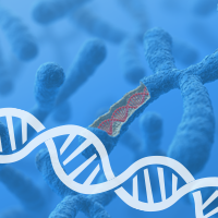 Surprising-Discovery-Shows-DNA-Makes-Up-Only-Half-a-Chromosome