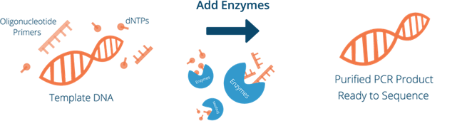 Enzymatic Purification Process