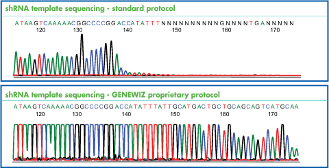 Small Hairpin RNA Template Sequencing